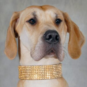 8 Row Large Crystal Collar - Made with SWAROVSKI® ELEMENTS